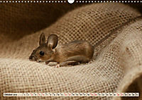 Die Hausmaus Anneliese (Wandkalender 2019 DIN A3 quer) - Produktdetailbild 10