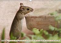 Die Hausmaus Anneliese (Wandkalender 2019 DIN A3 quer) - Produktdetailbild 2