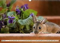 Die Hausmaus Anneliese (Wandkalender 2019 DIN A3 quer) - Produktdetailbild 6