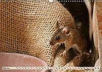 Die Hausmaus Anneliese (Wandkalender 2019 DIN A3 quer) - Produktdetailbild 4