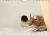 Die Hausmaus Anneliese (Wandkalender 2019 DIN A4 quer) - Produktdetailbild 3