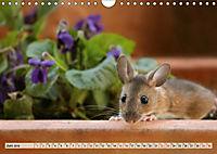 Die Hausmaus Anneliese (Wandkalender 2019 DIN A4 quer) - Produktdetailbild 6