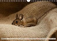 Die Hausmaus Anneliese (Wandkalender 2019 DIN A4 quer) - Produktdetailbild 10