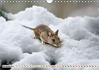 Die Hausmaus Anneliese (Wandkalender 2019 DIN A4 quer) - Produktdetailbild 11