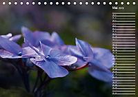 Die Hortensie und ihre vielen Gesichter (Tischkalender 2019 DIN A5 quer) - Produktdetailbild 5