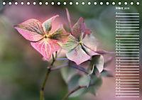 Die Hortensie und ihre vielen Gesichter (Tischkalender 2019 DIN A5 quer) - Produktdetailbild 3