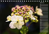 Die Hortensie und ihre vielen Gesichter (Tischkalender 2019 DIN A5 quer) - Produktdetailbild 6