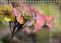 Die Hortensie und ihre vielen Gesichter (Tischkalender 2019 DIN A5 quer) - Produktdetailbild 7