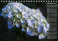 Die Hortensie und ihre vielen Gesichter (Tischkalender 2019 DIN A5 quer) - Produktdetailbild 11