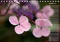 Die Hortensie und ihre vielen Gesichter (Tischkalender 2019 DIN A5 quer) - Produktdetailbild 1