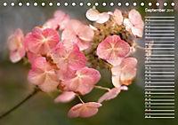 Die Hortensie und ihre vielen Gesichter (Tischkalender 2019 DIN A5 quer) - Produktdetailbild 9