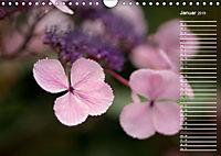 Die Hortensie und ihre vielen Gesichter (Wandkalender 2019 DIN A4 quer) - Produktdetailbild 1