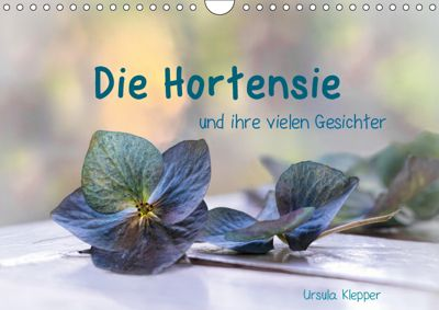 Die Hortensie und ihre vielen Gesichter (Wandkalender 2019 DIN A4 quer), Ursula Klepper