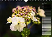 Die Hortensie und ihre vielen Gesichter (Wandkalender 2019 DIN A4 quer) - Produktdetailbild 6