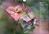 Die Hortensie und ihre vielen Gesichter (Wandkalender 2019 DIN A4 quer) - Produktdetailbild 3