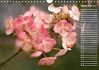 Die Hortensie und ihre vielen Gesichter (Wandkalender 2019 DIN A4 quer) - Produktdetailbild 9