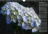 Die Hortensie und ihre vielen Gesichter (Wandkalender 2019 DIN A4 quer) - Produktdetailbild 11