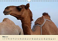 Die Kameliden. Hübsche Kamele, Lamas und Alpakas (Wandkalender 2019 DIN A4 quer) - Produktdetailbild 3