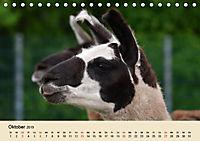 Die Kameliden. Hübsche Kamele, Lamas und Alpakas (Tischkalender 2019 DIN A5 quer) - Produktdetailbild 10