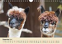 Die Kameliden. Hübsche Kamele, Lamas und Alpakas (Wandkalender 2019 DIN A4 quer) - Produktdetailbild 12