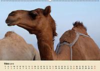 Die Kameliden. Hübsche Kamele, Lamas und Alpakas (Wandkalender 2019 DIN A2 quer) - Produktdetailbild 3