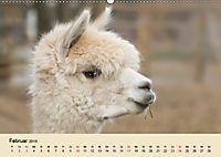 Die Kameliden. Hübsche Kamele, Lamas und Alpakas (Wandkalender 2019 DIN A2 quer) - Produktdetailbild 2