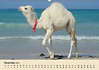 Die Kameliden. Hübsche Kamele, Lamas und Alpakas (Wandkalender 2019 DIN A2 quer) - Produktdetailbild 11