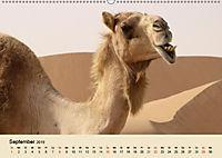 Die Kameliden. Hübsche Kamele, Lamas und Alpakas (Wandkalender 2019 DIN A2 quer) - Produktdetailbild 9