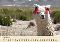 Die Kameliden. Hübsche Kamele, Lamas und Alpakas (Wandkalender 2019 DIN A2 quer) - Produktdetailbild 8