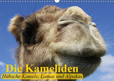 Die Kameliden. Hübsche Kamele, Lamas und Alpakas (Wandkalender 2019 DIN A3 quer), Elisabeth Stanzer
