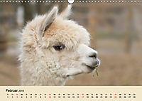 Die Kameliden. Hübsche Kamele, Lamas und Alpakas (Wandkalender 2019 DIN A3 quer) - Produktdetailbild 2
