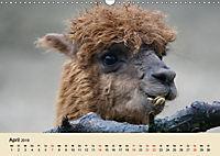 Die Kameliden. Hübsche Kamele, Lamas und Alpakas (Wandkalender 2019 DIN A3 quer) - Produktdetailbild 4