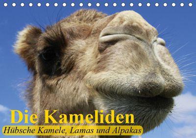 Die Kameliden. Hübsche Kamele, Lamas und Alpakas (Tischkalender 2019 DIN A5 quer), Elisabeth Stanzer