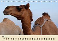 Die Kameliden. Hübsche Kamele, Lamas und Alpakas (Tischkalender 2019 DIN A5 quer) - Produktdetailbild 3