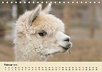 Die Kameliden. Hübsche Kamele, Lamas und Alpakas (Tischkalender 2019 DIN A5 quer) - Produktdetailbild 2