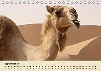 Die Kameliden. Hübsche Kamele, Lamas und Alpakas (Tischkalender 2019 DIN A5 quer) - Produktdetailbild 9
