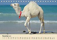 Die Kameliden. Hübsche Kamele, Lamas und Alpakas (Tischkalender 2019 DIN A5 quer) - Produktdetailbild 11