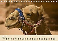 Die Kameliden. Hübsche Kamele, Lamas und Alpakas (Tischkalender 2019 DIN A5 quer) - Produktdetailbild 7