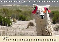 Die Kameliden. Hübsche Kamele, Lamas und Alpakas (Tischkalender 2019 DIN A5 quer) - Produktdetailbild 8