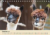 Die Kameliden. Hübsche Kamele, Lamas und Alpakas (Tischkalender 2019 DIN A5 quer) - Produktdetailbild 12