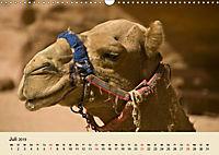Die Kameliden. Hübsche Kamele, Lamas und Alpakas (Wandkalender 2019 DIN A3 quer) - Produktdetailbild 7