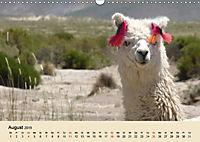 Die Kameliden. Hübsche Kamele, Lamas und Alpakas (Wandkalender 2019 DIN A3 quer) - Produktdetailbild 8