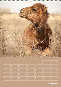 Die Kizilkum-Wüste in Usbekistan - Zwischen Rauheit und Romantik (Wandkalender 2019 DIN A2 hoch) - Produktdetailbild 6