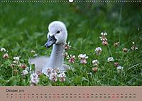 Die lieben Kleinen ... Tierkinder einfach zum Knuddeln (Wandkalender 2019 DIN A2 quer) - Produktdetailbild 2