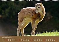 Die lieben Kleinen ... Tierkinder einfach zum Knuddeln (Wandkalender 2019 DIN A2 quer) - Produktdetailbild 6