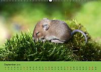 Die lieben Kleinen ... Tierkinder einfach zum Knuddeln (Wandkalender 2019 DIN A2 quer) - Produktdetailbild 13