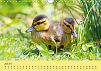 Die lieben Kleinen ... Tierkinder einfach zum Knuddeln (Wandkalender 2019 DIN A4 quer) - Produktdetailbild 2