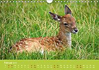 Die lieben Kleinen ... Tierkinder einfach zum Knuddeln (Wandkalender 2019 DIN A4 quer) - Produktdetailbild 11