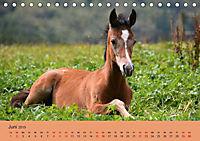 Die lieben Kleinen ... Tierkinder einfach zum Knuddeln (Tischkalender 2019 DIN A5 quer) - Produktdetailbild 5