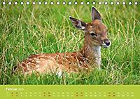 Die lieben Kleinen ... Tierkinder einfach zum Knuddeln (Tischkalender 2019 DIN A5 quer) - Produktdetailbild 2